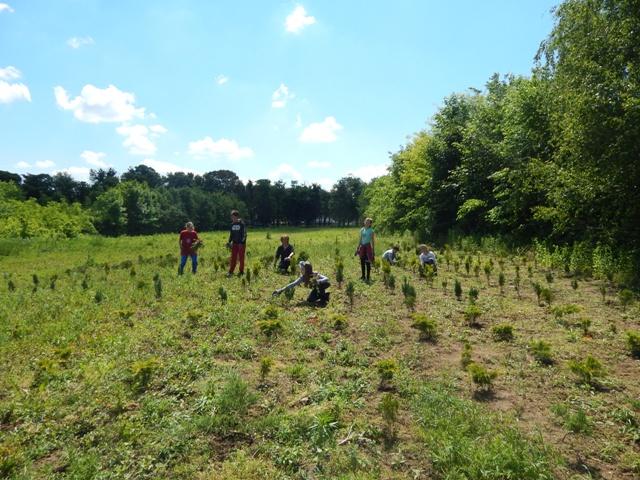 Od edukacije do akcije – Pošumimo Vojvodinu