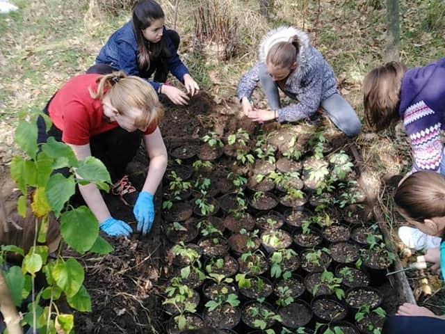 Programske aktivnosti Pokreta gorana koje se finansiraju iz budžeta grada Sombora